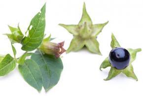 Adenoidní vegetace - Vše o zdraví