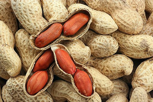 Alergie na jídlo - Vše o zdraví