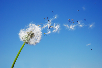 Alergická rýma - Vše o zdraví