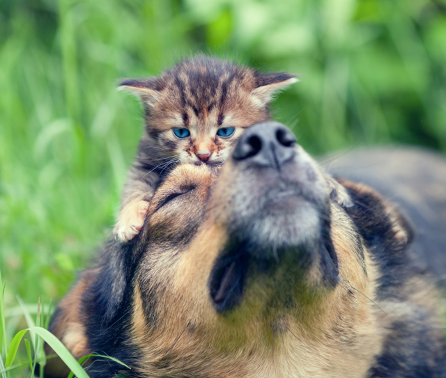 Alergie na zvířata - Vše o zdraví