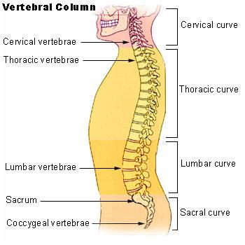 Bolesti kostrče - Vše o zdraví