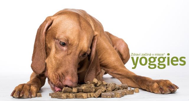 Hodnoty psa - Vše o zdraví