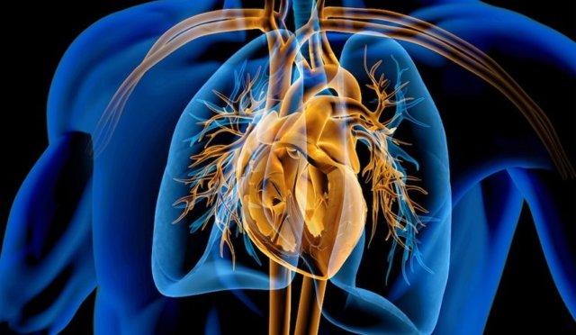 Cévy - Vše o zdraví