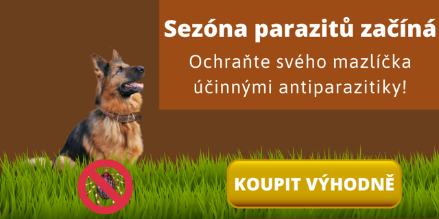 Borelioza u psa - Vše o zdraví