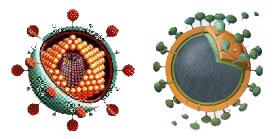 Hiv - Vše o zdraví