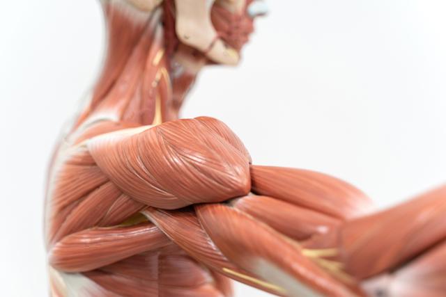 Bolesti svalů - Vše o zdraví