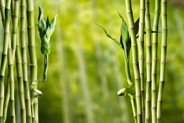 Hemangiom jater - Vše o zdraví