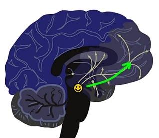 Dopamin - Vše o zdraví