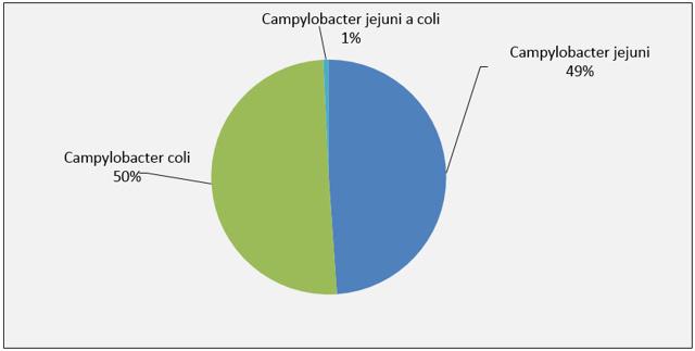 Campylobakterie - Vše o zdraví