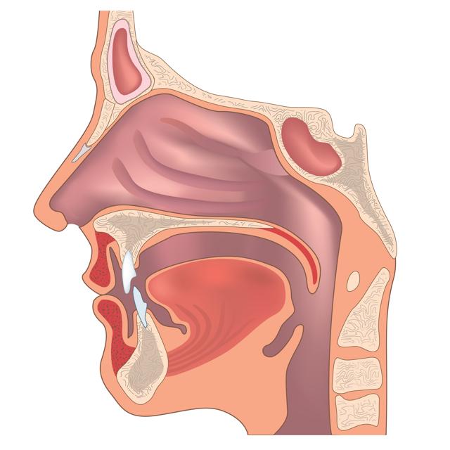 Jak na plný nos? Tipy, jak zmírnit rýmu – vše o zdraví