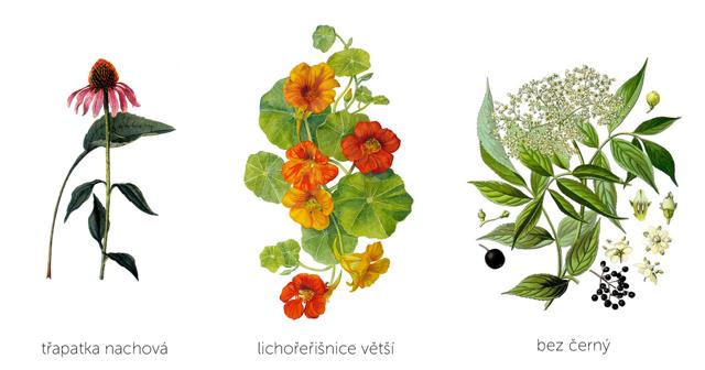 Nachlazení a bylinky – vše o zdraví