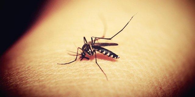 Tipy z lékárny: Hmyzí bodnutí už nebudou váš problém – vše o zdraví