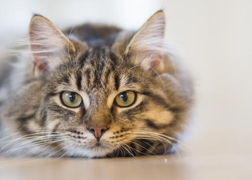 """Kočičí pohled a """"psí oči"""" – vše o zdraví"""