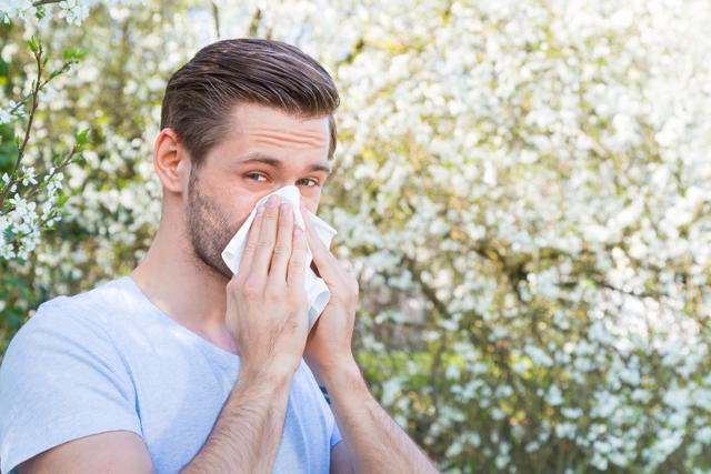 Pyly stromů, alergeny – vše o zdraví