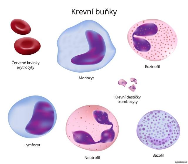 Monocyty - Vše o zdraví
