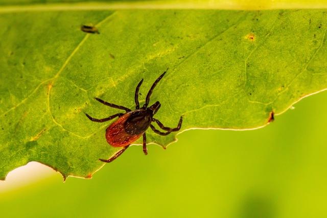 Mravenčení chodidel - Vše o zdraví