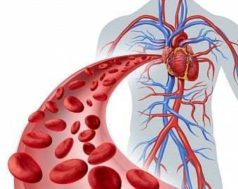 Nedostatek krevních destiček - Vše o zdraví