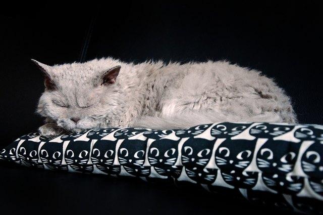 Kočka - Vše o zdraví