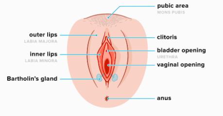 Mužské pohlavní orgány - Vše o zdraví