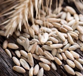 Pšenice - Vše o zdraví