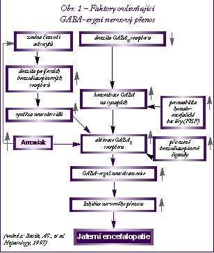 Jaterní encefalopatie - Vše o zdraví