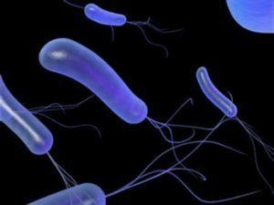 Pseudomonas aeruginosa - Vše o zdraví