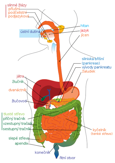 Laktobacily - Vše o zdraví