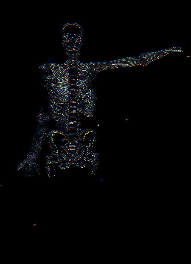 Kostra hrudníku - Vše o zdraví