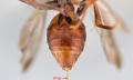 Kousnutí pavoukem - Vše o zdraví