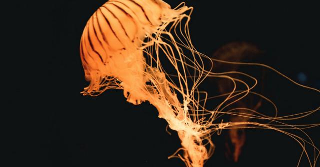 Mořský ježek - Vše o zdraví
