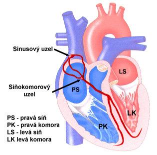 Přeskakování srdce - Vše o zdraví